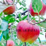 りんご品種おまかせ2種類の詰め合わせセット