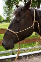 Knotenhalfter (Profi-Trainerqualität) - Pony