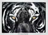 Estampe tigre