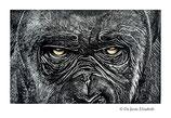 Estampe Gorille