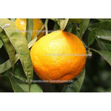 Orange süss 1a BIO
