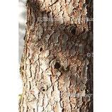 Cedernholz 1a