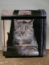 Katzen-Siesta
