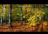 Chemnitzer Parks & Wälder