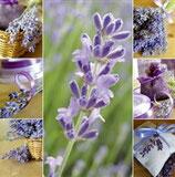 Karte Lavendel