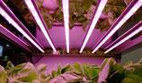 15W T8 LED Aufzucht Pflanzenlampe, Keimung, Stecklinge, Grünpflanzen