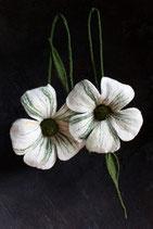 Doppelblüten (Weiß)