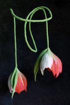 Doppelblüten (Rot/Pink)