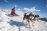 Schlittenhunde Winter Workshop Seefeld bei Telfs (A)