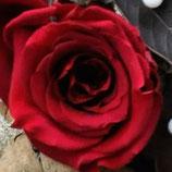Gestabiliseerde rozen, rood 2,5 cm