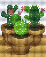 801443 Cactus