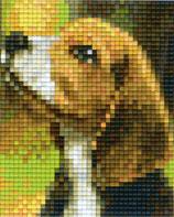 801458 Beagle