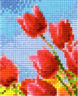 801332 Tulipe