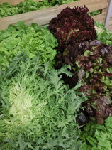 .Salades ou Endives