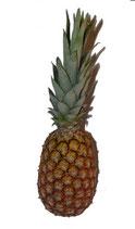 Ananas pain de sucre 1 kg env.