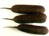 Radis noir