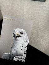 Small print 'Gyrfalcon' with gold foil