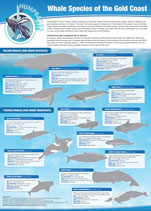 Whales and dolphins of the Gold Coast poster