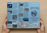 Humpback Whale Behavior Guide