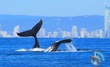 Gold Coast Whale Art Series