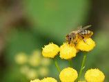 Erweiterung Deiner Bienenweide