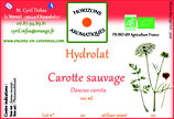 Caorotte sauvage hydrolat 100 ml