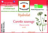 Carotte sauvage hydrolat 100 ml