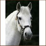 LG-Zaum - Gebissloser Zaum für jedes Pferd