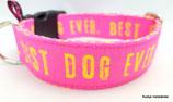 Klickverschluss Halsband Best Dog Ever pink/ 16.