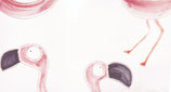 Design fenicottero rosa