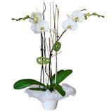 Orquidea Ref-PL4
