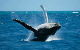 Samana Beautiful Beaches Tour mit Whale Whatching