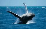 Samana - 3 Traumstrände Tour mit Whale Whatching