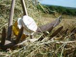 Gelée des prairies fleuries (pot de 120 Gr)