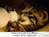 """Postkarte 10 """"Tigerlen - Wir können keine...."""""""