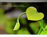"""Postkarte 14 """"Pfeifenwinde - ...von Herzen alles Gute"""""""