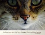 """Postkarte 01 """"Mauzi - Das Leben und dazu...."""""""