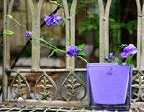 Glasvase lila eckig klein