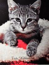 """Postkarte 13 """"Tigerlen - Frohe Weihnachten"""""""