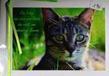 """Doppelkarte 14 Tigerlen - """"Das Leben und dazu...."""""""