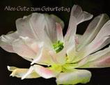 "Postkarte 12 ""Tulpe - Alles Gute zum...."""