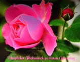 "Postkarte 17 ""Rose Leonardo da Vinci - Herzlichen Glückwundsch..."""