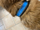 hochwertiges Hundehalsband
