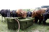 Weidetränke für Rinder und Pferde