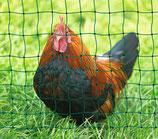 Hühnerfutter lose 1 kg