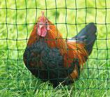Hühnerzaun - Geflügelnetz