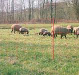 Schafnetz elektrisch