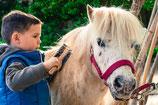 Ein Ponynachmittag