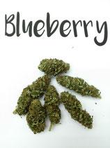 Blueberry - Indoor