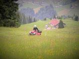 Swissness Driver + Brunch